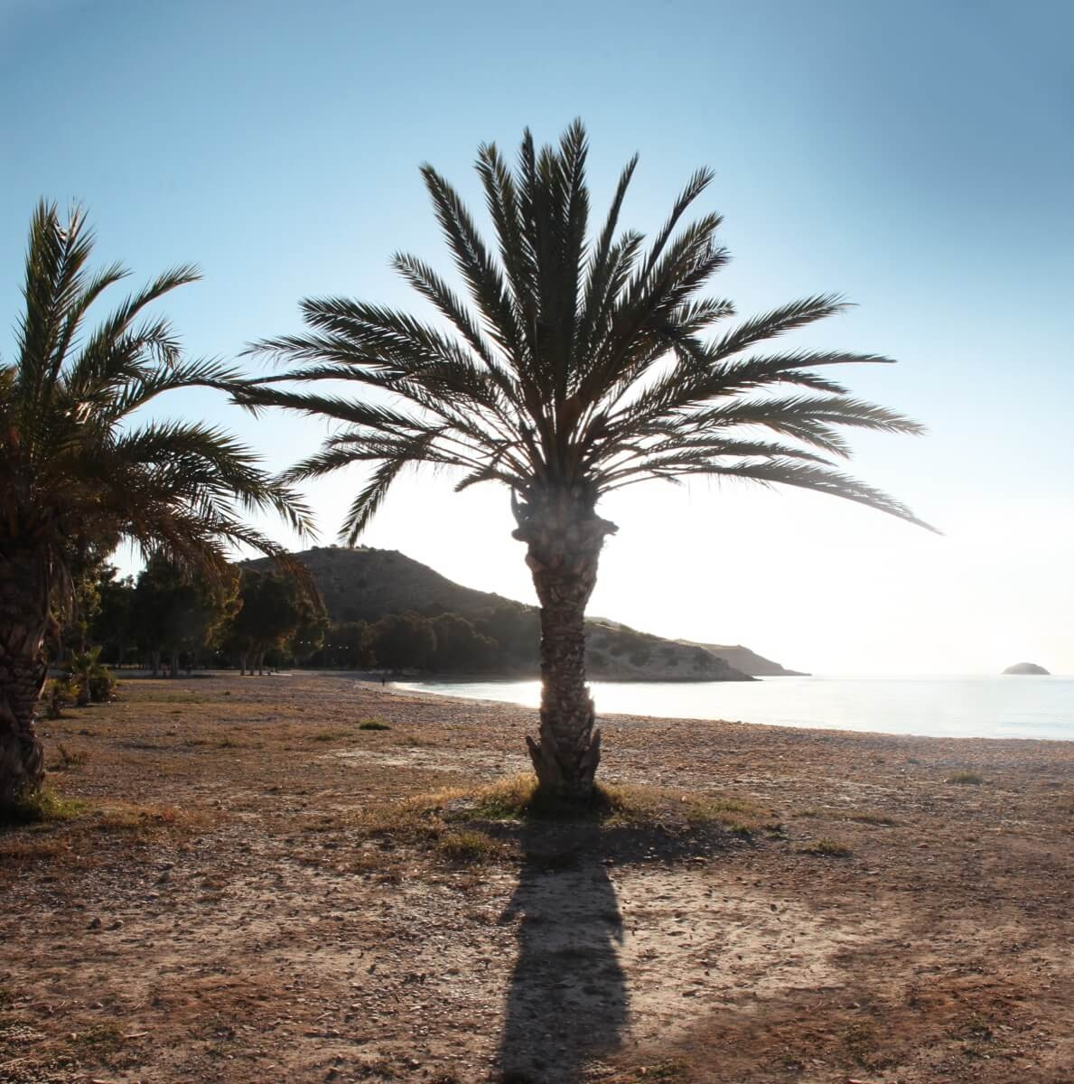 Fotografía de palmera en la Playa el Torres, Villajoyosa (Alicante)