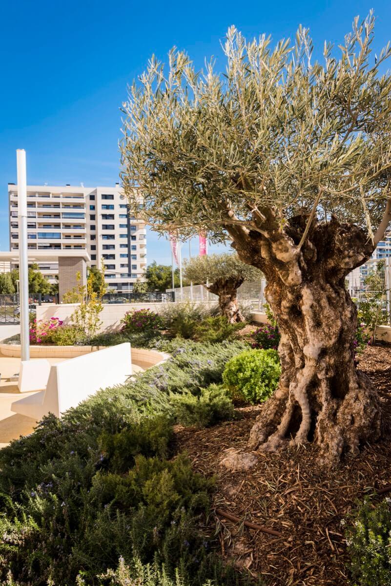 Jardín soleado en urbanización residencial
