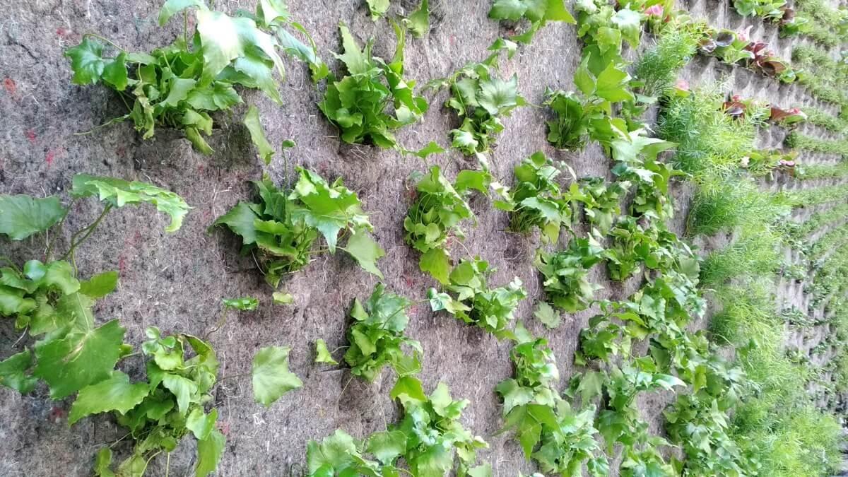Fotografía detalle de las especies plantadas en el jardín vertical, hidropónico