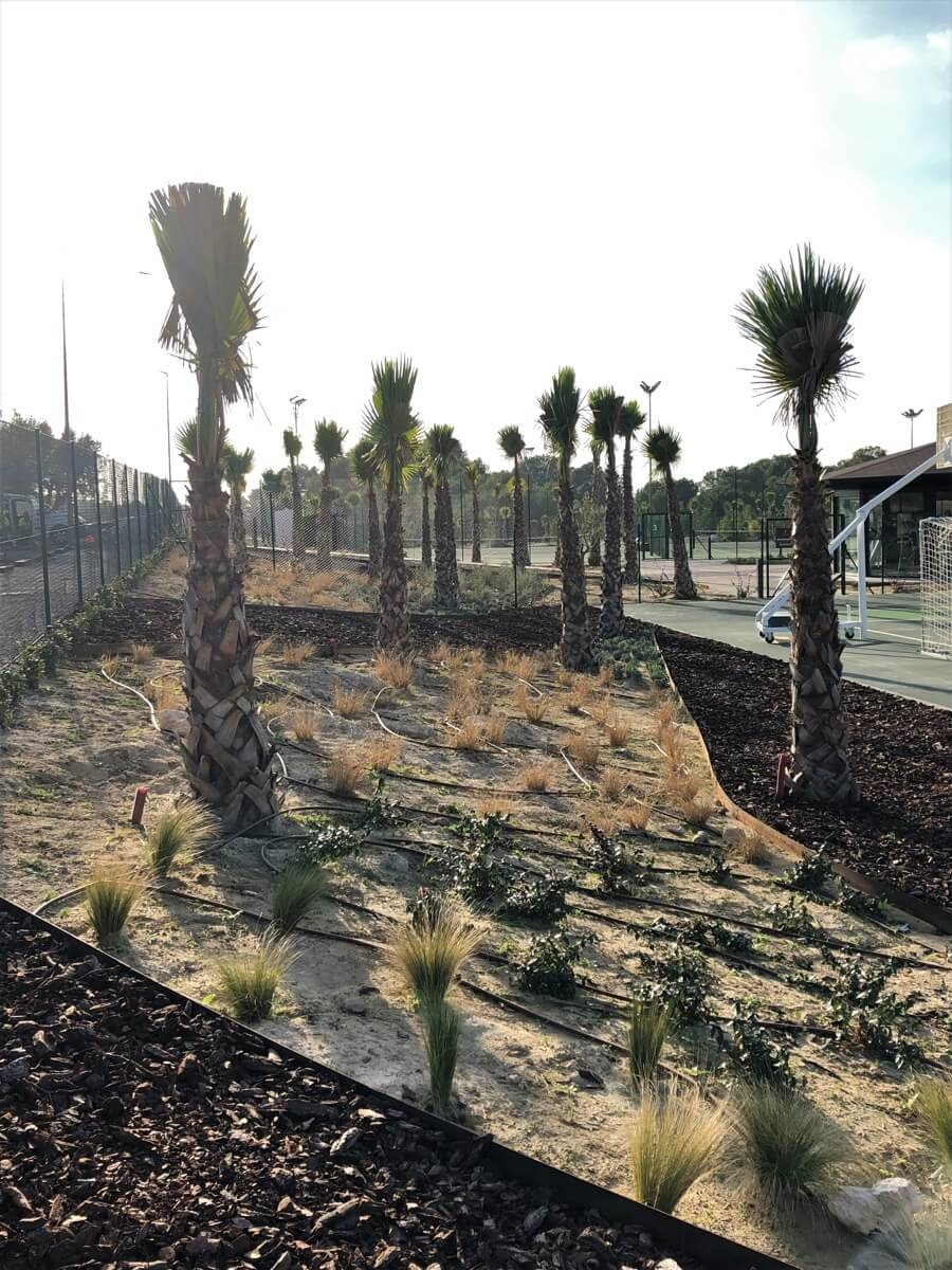 Plantación de palmeras en pista multideportiva de las Colinas Golf & Country Club
