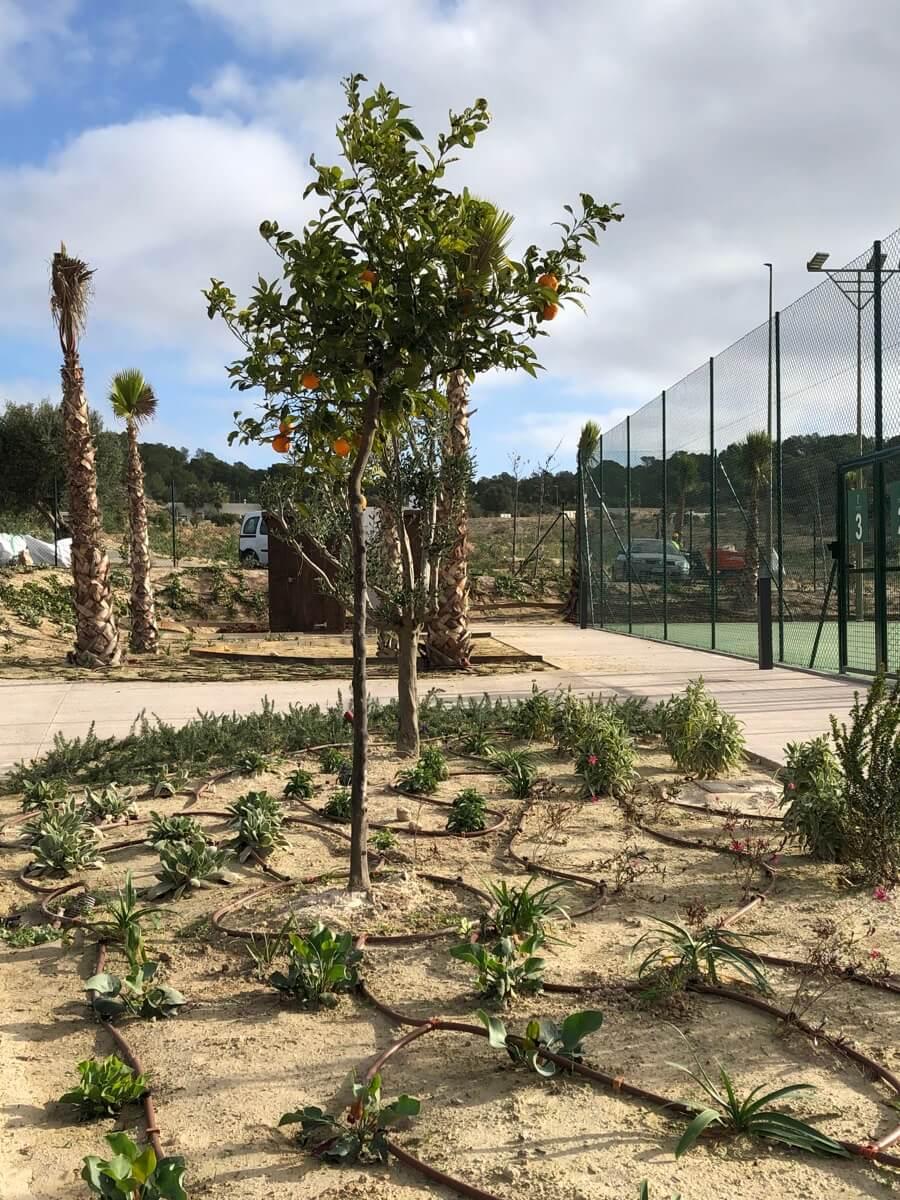 Plantaciones en pistas de tenis de Las Colinas Golf & Country Club